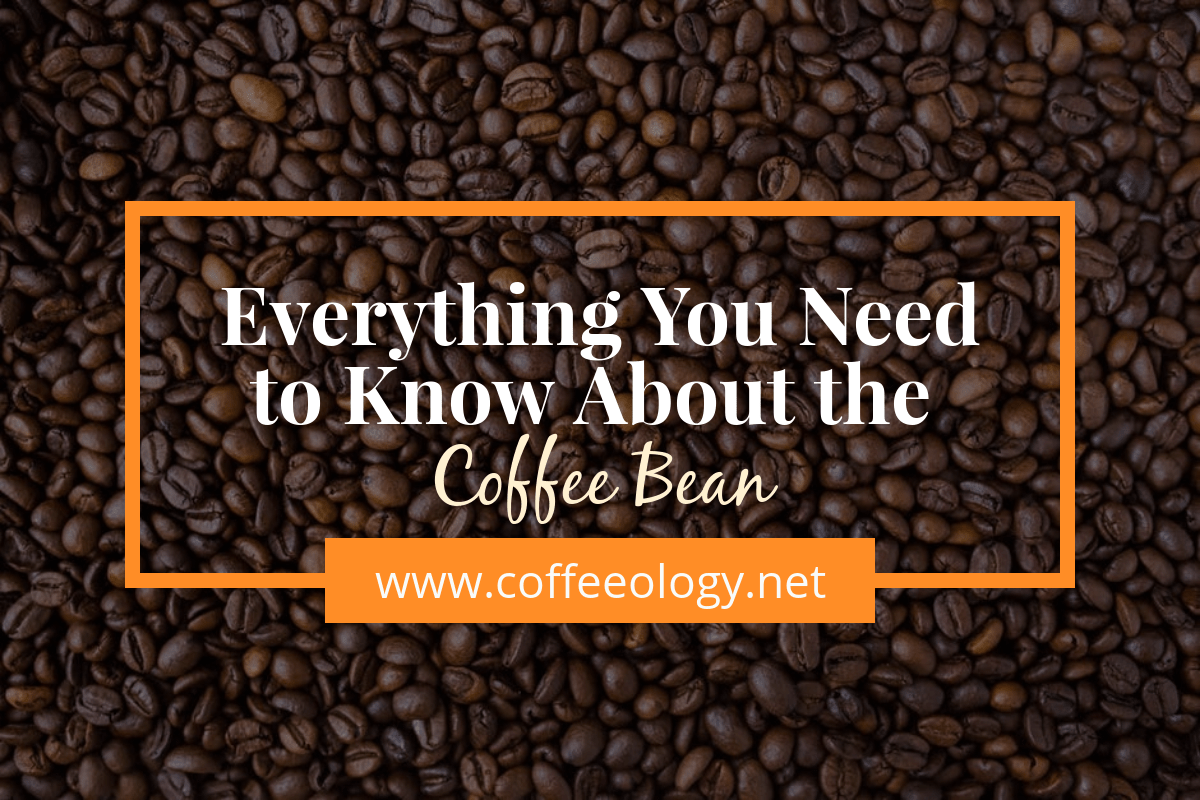Everything You Need to Know About the Coffee Bean